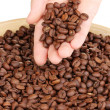 Coffee beans in hand close-up — Stock Photo #13744484