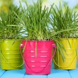 Green grass in buckets on wooden table on bright background - Stock Photo