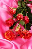 Belle rose di rosso-giallo su close-up in raso rosa — Foto Stock