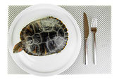 Red ear turtle on plate isolated on white — Stock Photo