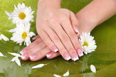 Woman hands with french manicure and flowers on green background — Stock Photo
