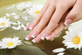 Woman hands with french manicure and flowers in green bowl with water — Stock Photo