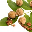 Walnuts with green leaves, isolated on white — Stock Photo #13778031