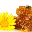 Royalty-Free Stock Photo: Sweet honeycomb with honey, bee and flower, isolated on white