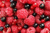 Ripe berries, close up — Stock Photo
