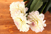Beautiful white dahlias on wooden background close-up — Stock Photo