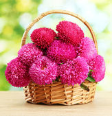 Pink aster flowers in basket on green background — Stock Photo