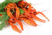 Tasty boiled crayfishes with fennel isolated on white — Stock Photo