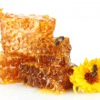 Sweet honeycomb with honey, bee and flower, isolated on white — Stock Photo #13870461
