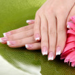 Woman hands with french manicure and flower on green background - Стоковая фотография
