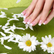 Woman hands with french manicure and flowers in green bowl with water - Стоковая фотография