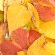 Bright autumn leaves, close up — Stock Photo #13871021