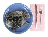 красная уха черепаха на плите, изолированные на белом — Стоковое фото