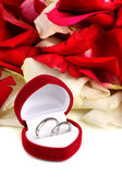 Beautiful box with wedding rings on red, white and pink rose petals — Stock Photo