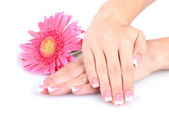 Woman hands with french manicure and flower isolated on white — Stok fotoğraf