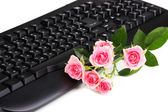 Pink roses on keyboard close-up internet communication — Stock Photo