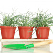Pots with seedling isolated on white - Stock Photo
