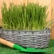 Green grass in basket near fence - Stock Photo