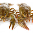 Alive crayfishes isolated on white close-up — Stock Photo