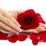 mains de la belle femme à la rose, isolé sur blanc — Photo
