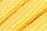 Corn background — Stock Photo