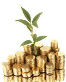 Plant growing out of gold coins isolated on white — Stock Photo
