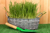Green grass in basket near fence — Stock Photo
