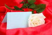 красивая роза на красной ткани — Стоковое фото