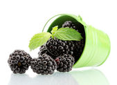 Beautiful blackberries with leaves in bucket isolated on white — Stock Photo