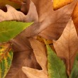 Composition from yellow autumn leaves background - Foto Stock