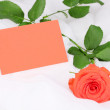 Stock Photo: Beautiful rose on white cloth