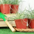 Pots with seedling on green grass on wooden background — 图库照片