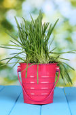 Green grass in bucket on wooden table on bright background — Stock Photo