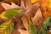 Skład żółty jesienią liście — Zdjęcie stockowe