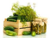新鲜黄瓜在木盒、 泡菜和莳萝,孤立在白色 — 图库照片