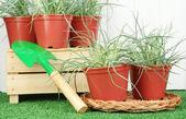 Pentole con piantina su erba verde su sfondo in legno — Foto Stock
