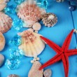 Decor of seashells close-up on blue wooden table — Stockfoto