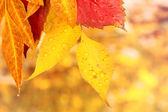 Leaves and rain drops — Stock Photo