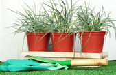 Pots with seedling on green grass on wooden background — Stock Photo