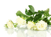 Mooie witte rozen op witte achtergrond close-up — Stockfoto