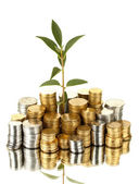 Plant growing out of gold and silver coins isolated on white background cl — Stock Photo