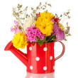 Red watering cwith white polka-dot with flowers isolated on white — Stock Photo #14081133