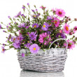 Beautiful bouquet of purple flowers in basket isolated on white — Stock Photo #14081933