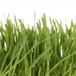 Green grass in basket isolated on white - Stock Photo