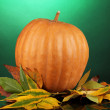 Ripe orange pumpkin with yellow autumn leaves on green background — Stock Photo #14082253