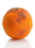 Rotten orange isolated on white — Stock Photo