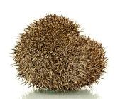 Hedgehog, isolated on white — Stock Photo