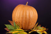 Ripe orange pumpkin with yellow autumn leaves on purple background — Stock Photo
