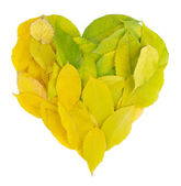 Bright autumn leaves lie in shape of heart isolated on white — Stock Photo