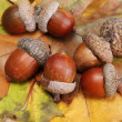 Brown acorns on autumn leaves, close up — Stock Photo #14306089
